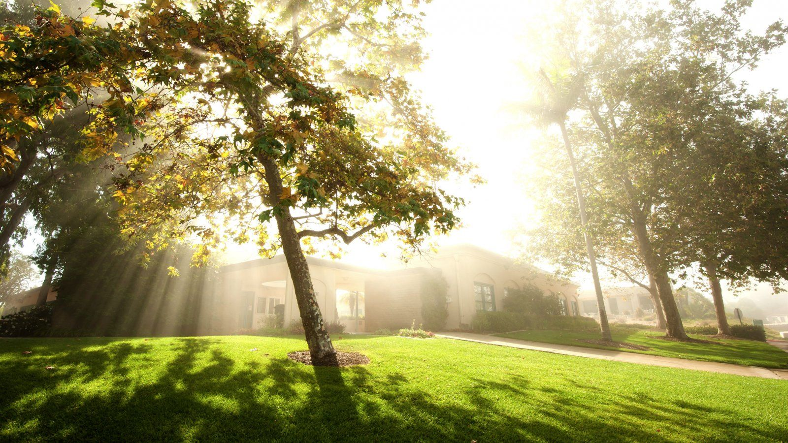 The sun begins to shine through the fog on campus.