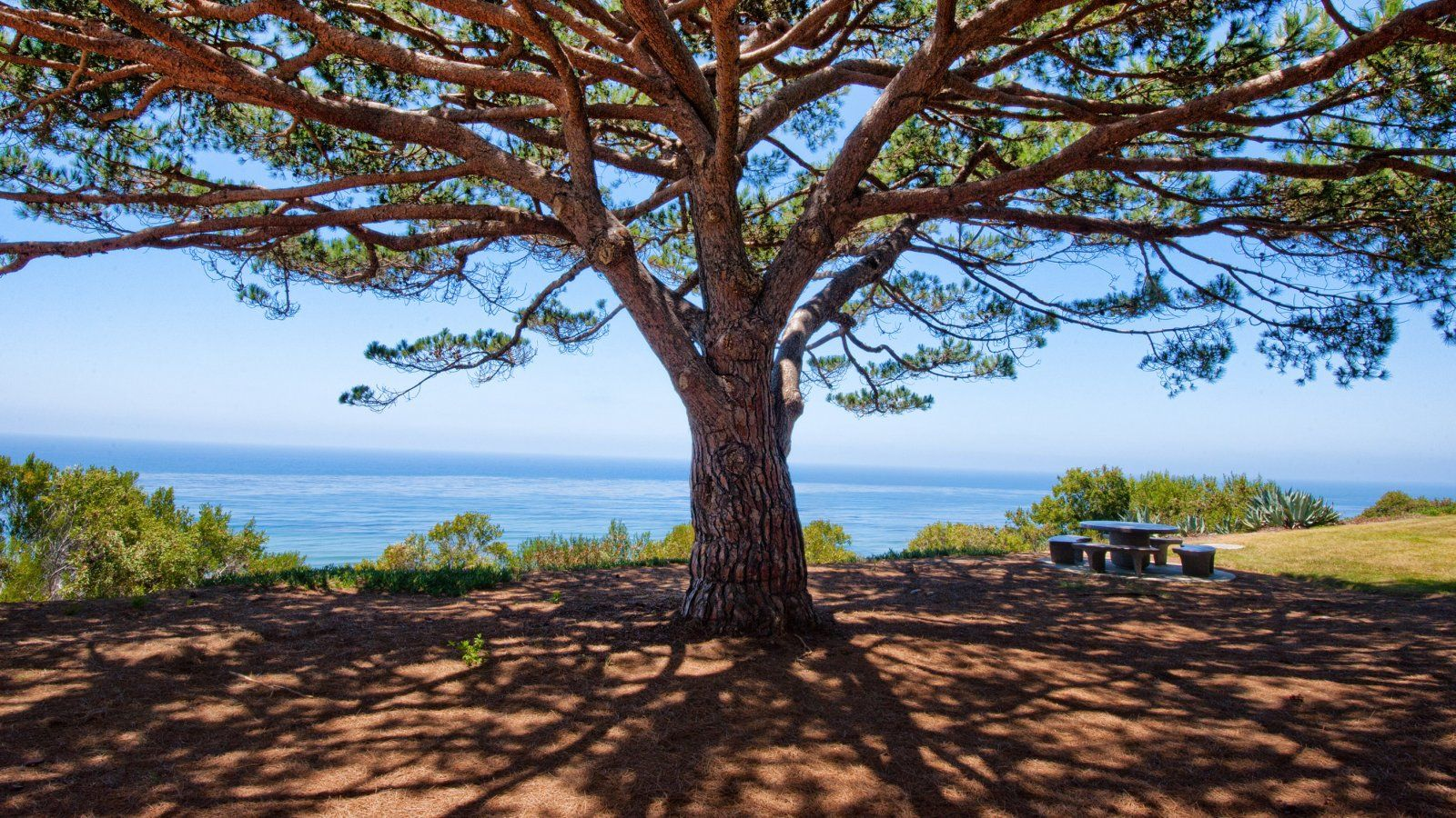 A tree overlooks the ocean on the PLNU campus.