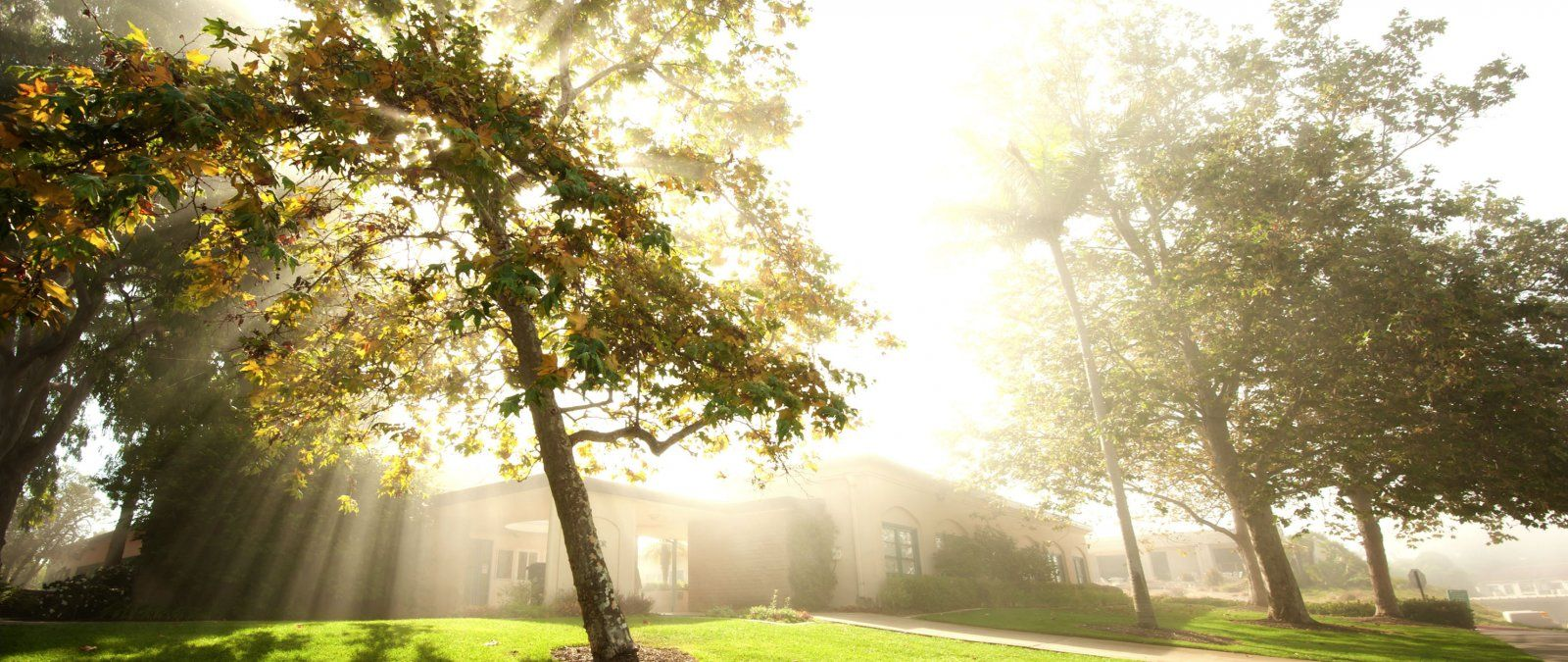 Morning sun streams in by Taylor Hall.